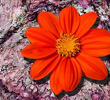 Orange Dahlia by hootonles