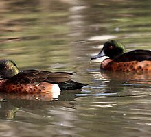 Two Brown Ducks by yolanda