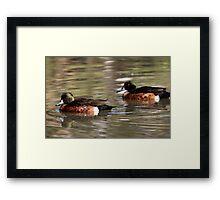 Two Brown Ducks Framed Print