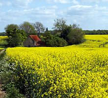 Barn and Rapeseed by saxonfenken