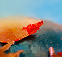 The red flake. by Baska
