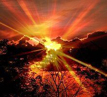 Sun rays © by Dawn M. Becker