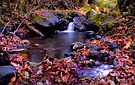 Fall at the Calapooya by Charles & Patricia   Harkins ~ Picture Oregon