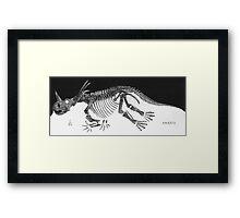 Cool Styracosaurus Framed Print