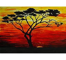 Sunset tree Photographic Print