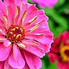 Colorful Flowers in a New York yard  by DearMsWildOne