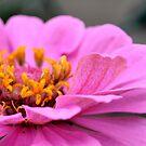 Untitled Flower  by DearMsWildOne