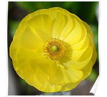 Pretty Yellow Flower Poster