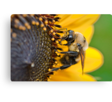 Busy Bumble Canvas Print