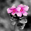 Desert Flowers by thruHislens .