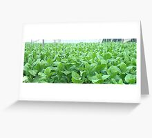 Tobacco Leaves  Greeting Card