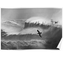 Storm Bird - Hartlepool Heugh Breakwater Poster