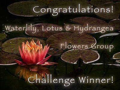 banner challenge entry by Celeste Mookherjee