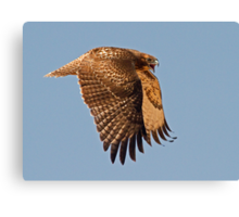 070911 Red Tailed Hawk Canvas Print