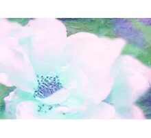 Soft as a summer's breeze Photographic Print