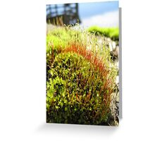 It's a Mosses Life! Greeting Card