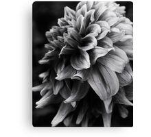 Monochrome Chrysanthemum Canvas Print