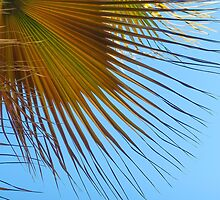 Frond by John Thurgood