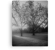 Monochrome Misty Trees Canvas Print