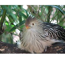 """Angry Bird?"" Photographic Print"