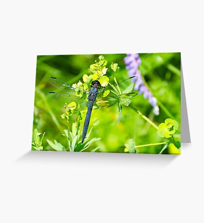 Slaty Skimmer Dragonfly Greeting Card