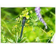 Slaty Skimmer Dragonfly Poster