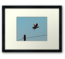 Jackal Buzzard Take Off Framed Print