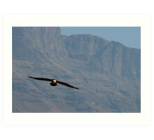 Bearded Vulture/ Lammergeier Art Print