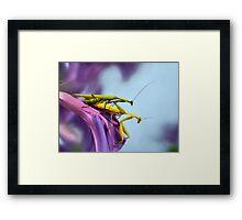 The mating Framed Print