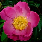 Peony Surprise by charmedy