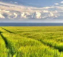 Among the Fields of Barley by GillBell