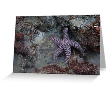 Second Beach Starfish (La Push, Washington) Greeting Card