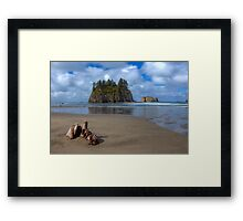 Cypress in the Sand (La Push, Washington) Framed Print