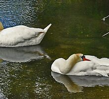 Swans on the Test by Kuma55
