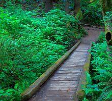 Second Beach Footbridge (La Push, Washington) by Brendon Perkins