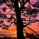 That Old Man Sun by Charles & Patricia   Harkins ~ Picture Oregon