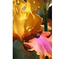 Golden Glow Photographic Print