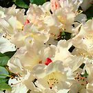 Rhododendrons Flowers Garden Yellow art prints Baslee Troutman by BasleeArtPrints