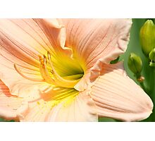 Softest Peach Photographic Print