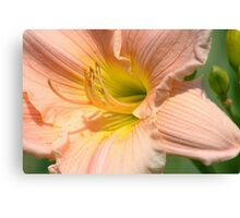 Peach Sorbet Canvas Print