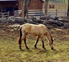 Feeding Horse by Chuck Chisler