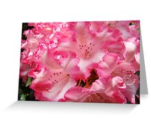 Summer Rhododendron Flowers Pink White art prints Greeting Card