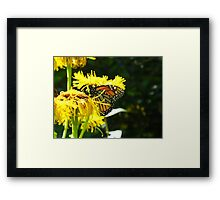 Excuse me but can't a Butterfly get a little privacy? Framed Print