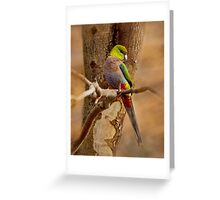 """Little Red Capped Parrot"" Greeting Card"