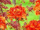 Floral art prints Orange Rhodies Flowers Green Garden by BasleeArtPrints