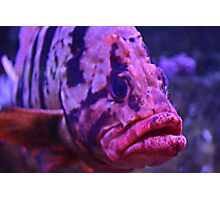 Da Fish Photographic Print