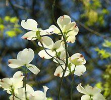 White Dogwood Flowers Tree art print Blue Sky by BasleeArtPrints