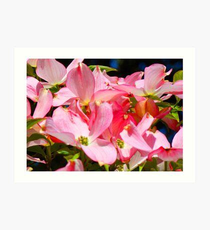 Bright Colorful Pink Dogwood Flowers art prints Baslee Art Print