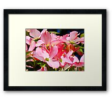 Bright Colorful Pink Dogwood Flowers art prints Baslee Framed Print