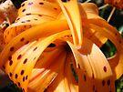 Summer Orange Tiger Lily Flower art print Baslee Troutman by BasleeArtPrints